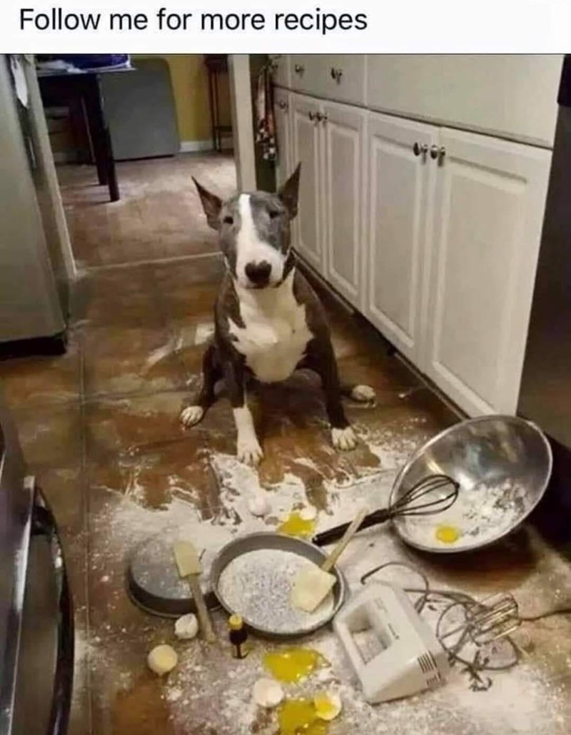 dog-follow-more-recipes.jpg